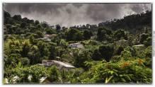 Guyane - 1999