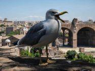 2017 - Rome